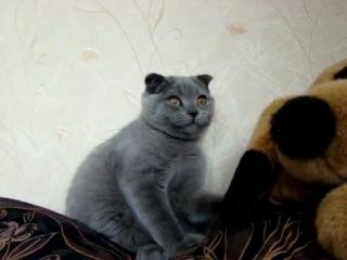 """А это воще кот БЕГЕМОН из """"Мастер и Маргарита!"""""""