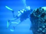 Подводные прогулки с дельфинами - 03